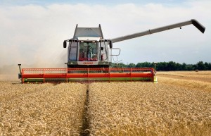 Combining harvesting in Cambridgeshire