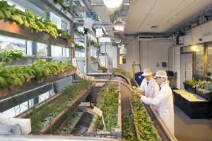 Vertical farm at Wigan UTC